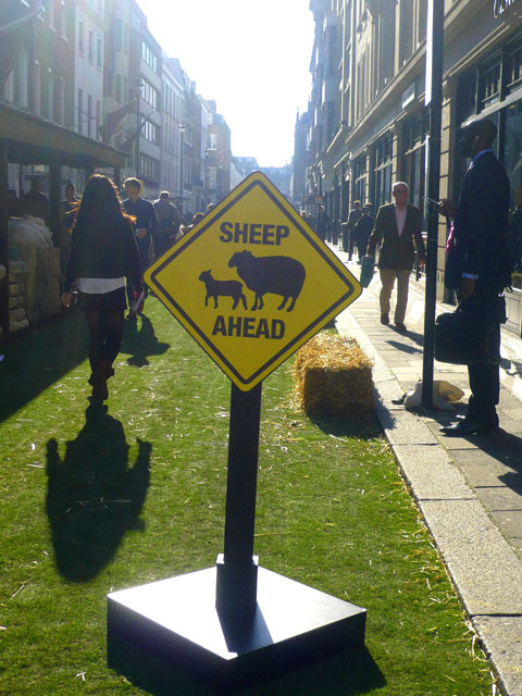 Sheep-ahead-1