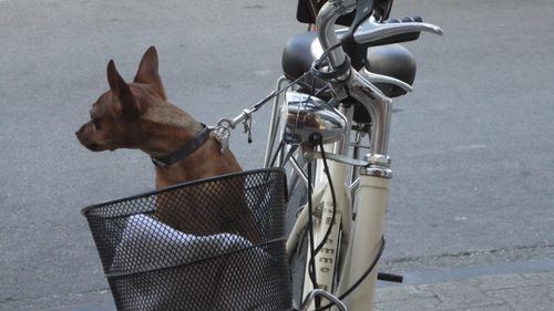 Bikes with dog