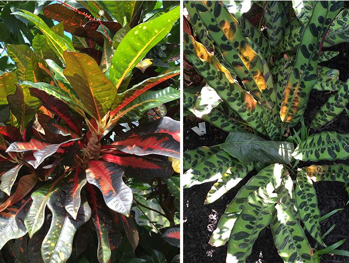 Botanical gardens Ednburgh_the womens room_02