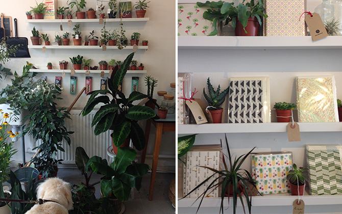 Botany E5 4