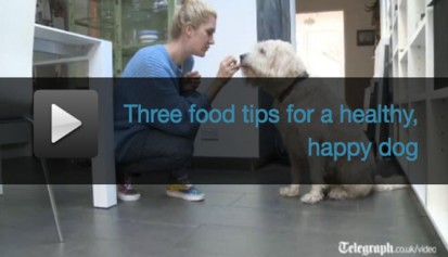 Three tips for a happy healthy dog
