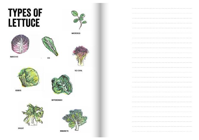 cicada books