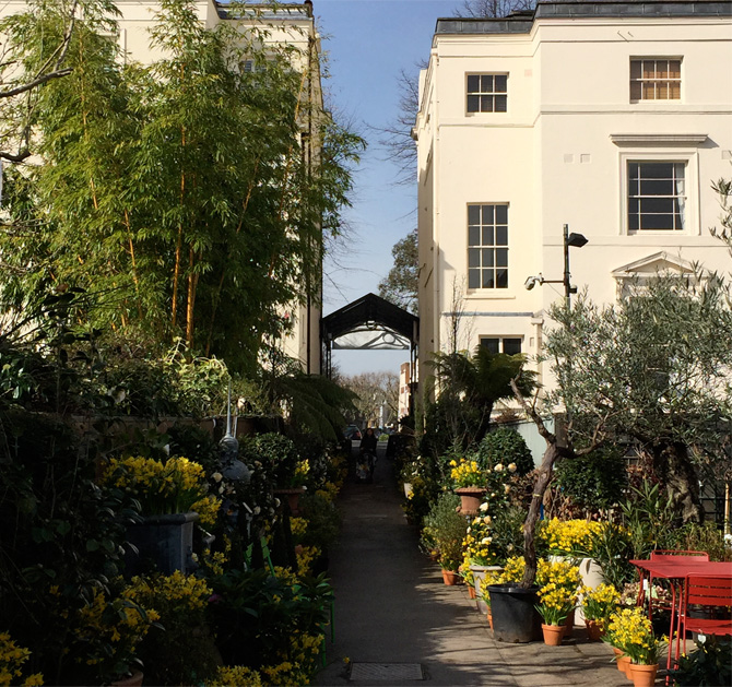 Clifton Nurseries, with its tiny hidden entrance