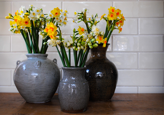 daffs scented narcissi