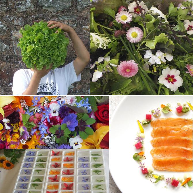 edible-flowers-maddox-farm