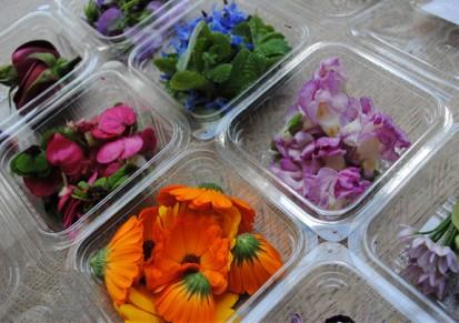 flowers-maddox-edibles