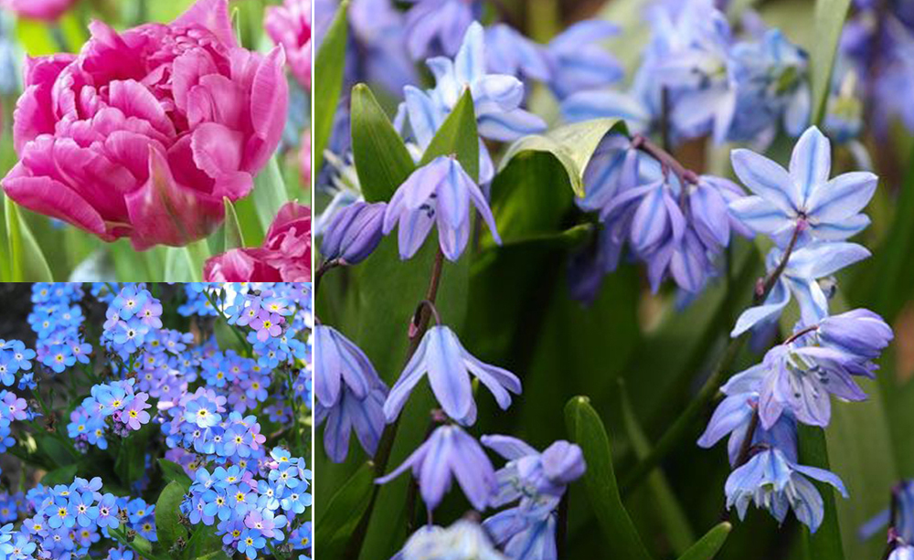 flowers0111