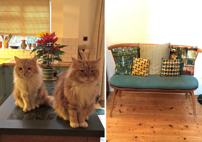 helen's cats
