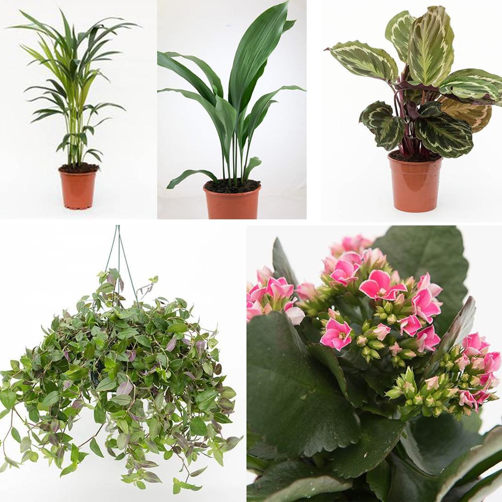 indoor-gardening-pots