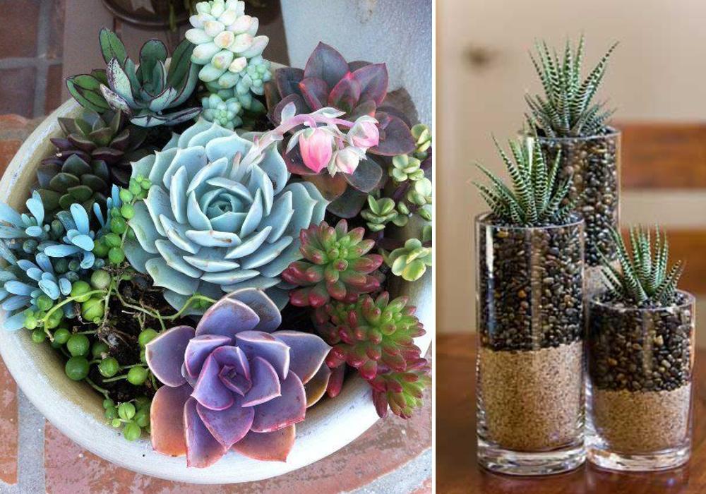 indoor-gardening-thewomensroomblog-04