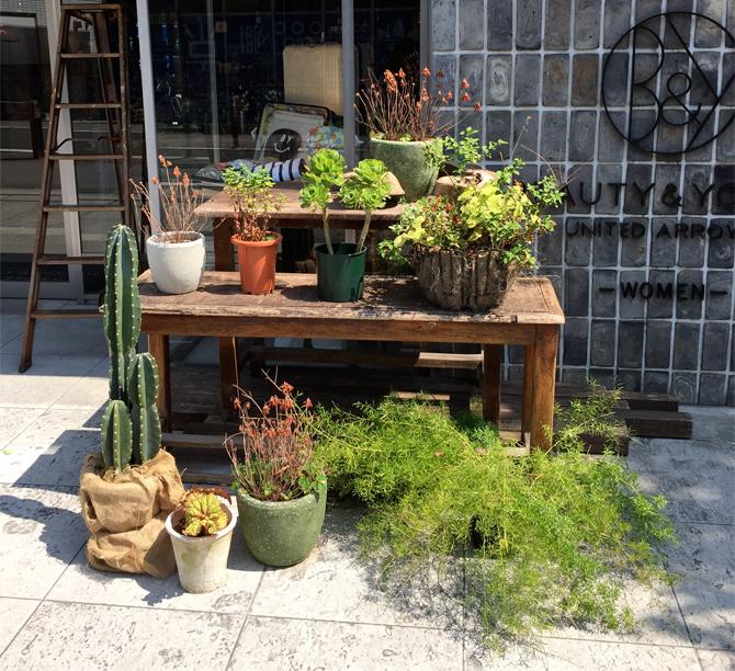 japan botanics