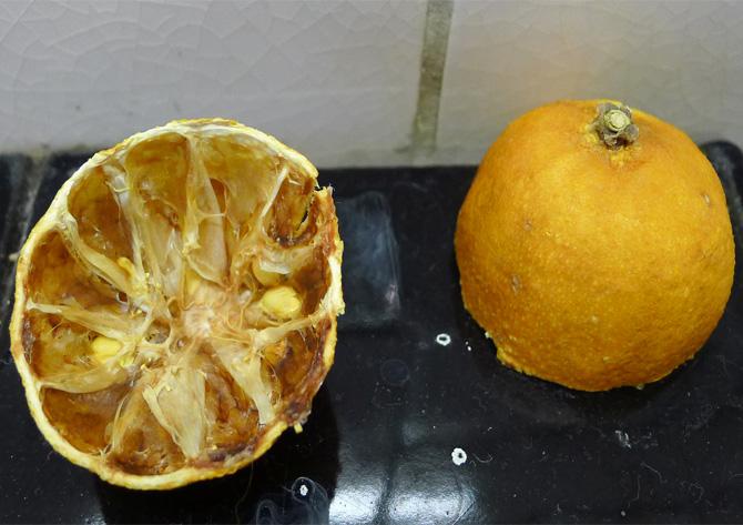 lemon rinds on martha moments