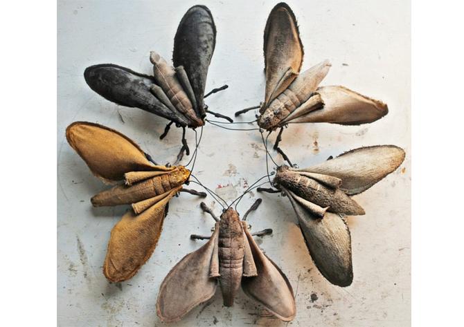 moths from mr finch