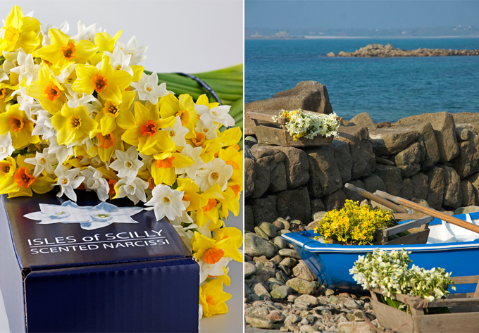 scented narcissi from isles of scilly, the women's room blog